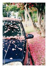 Natures Confetti