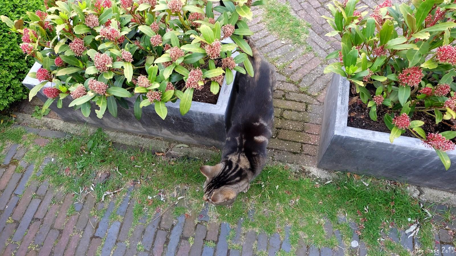Cat 2, Den Haag, Nederland