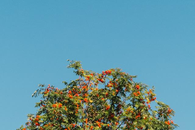 top of tree against blue sky