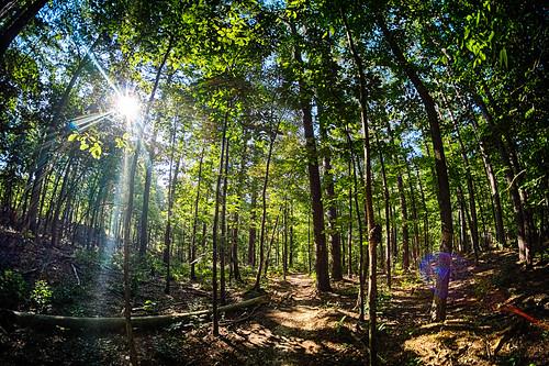 trees landscape unitedstates hiking backpacking arkansas ultralight mena eaglerockloop caddogap littlemissouritrail