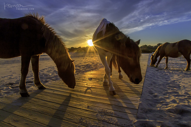 Wild Ponies at Sunset