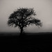 Lone tree... by Hasan Yuzeir