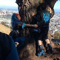 tree hugging on Bernal Heights