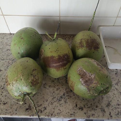Assalto ao coqueiro