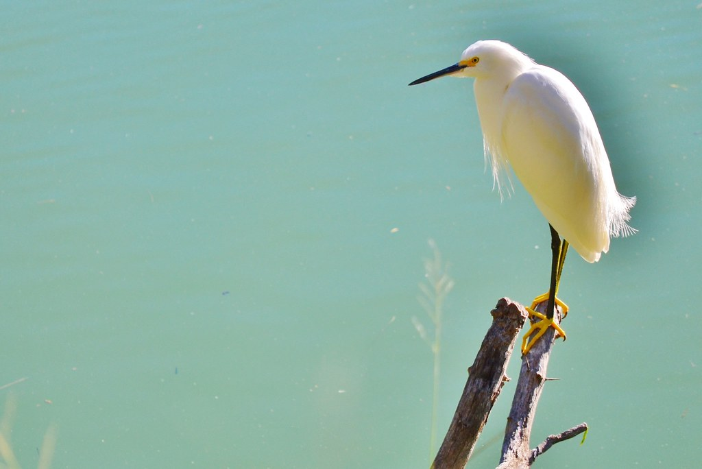 EWBC Wildlife-Birds
