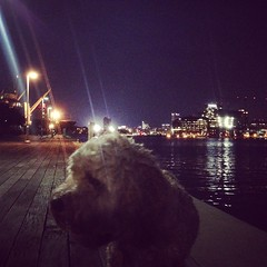 Shaggy #Archie taking in the new bed time walk sights
