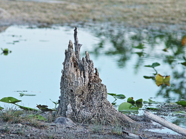 Enchanted Island stump landlocked 20150724