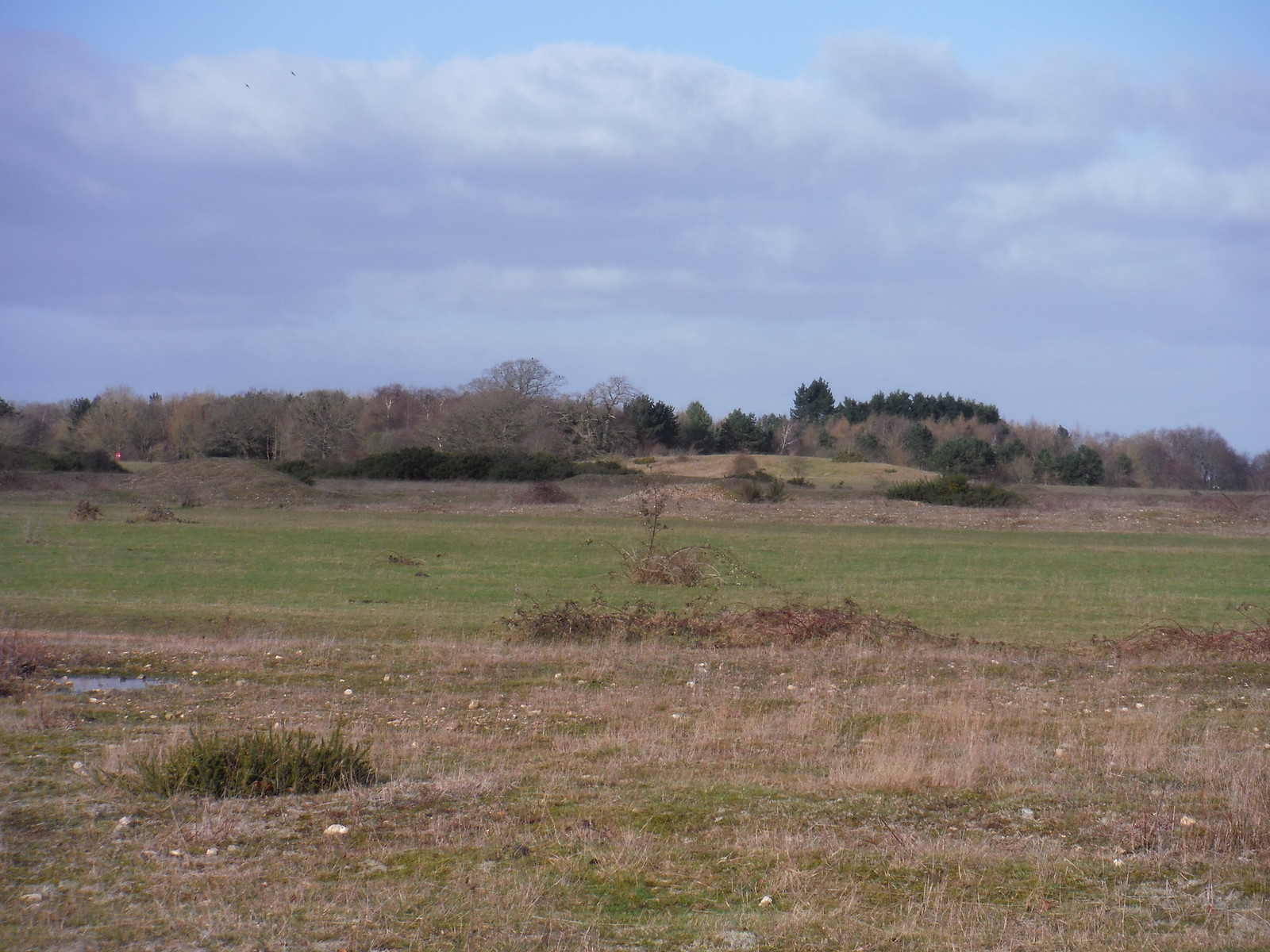 Greenham Common, easterly end SWC Walk 34 Newbury Racecourse to Woolhampton (Midgham Station)