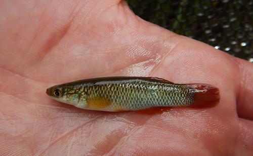 fish water stream wildlife wmd usfws usfishwildlifeservice usfwsmidwest wetlandmanagementdistrict