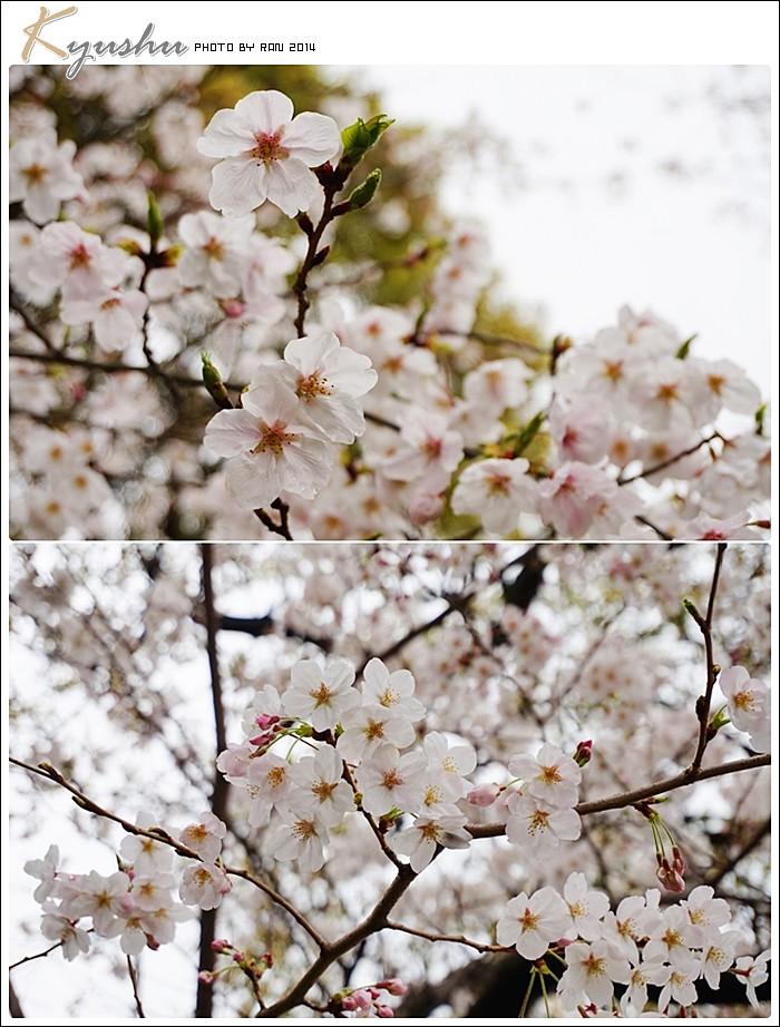 kyushu20140326013