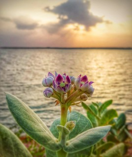 Beautiful wild flower and sunset