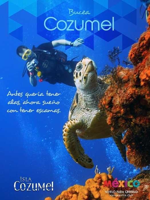 Buceo-Tortugas Cozumel