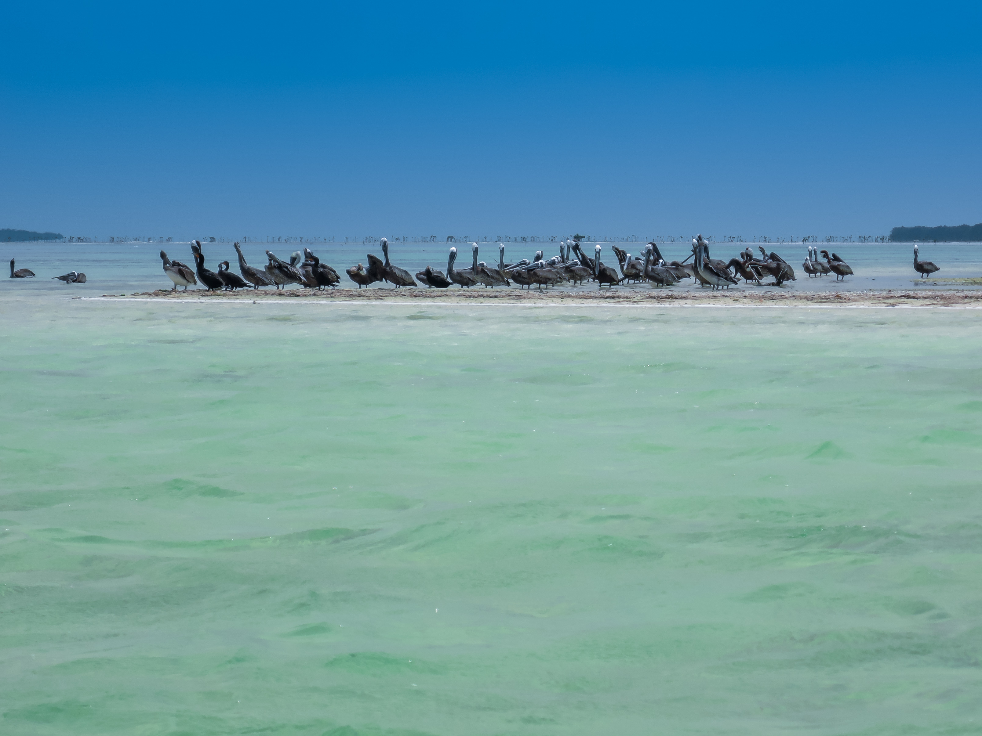 Holbox Island Mexico  City pictures : Back to photostream