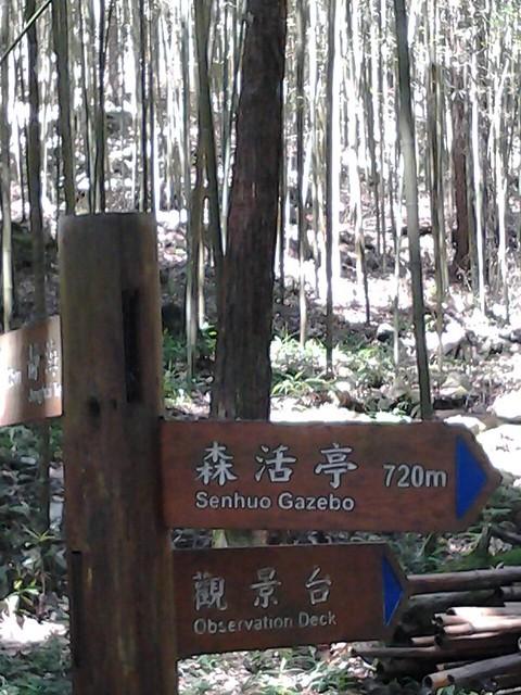 16464八仙山
