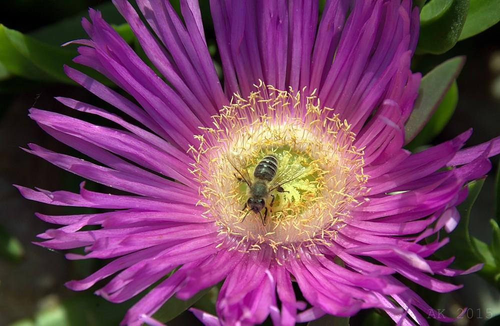 Thassos-Flowers