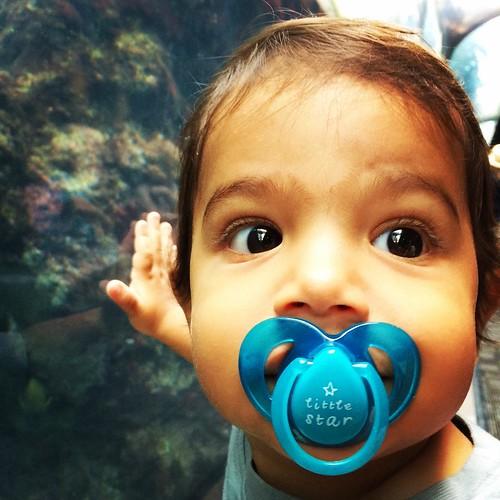 Marine life at the aquarium.