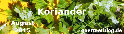 Garten-Koch-Event August: Koriander [31.08.2015]
