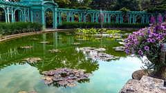 The Lily Pool is Colorful in the Walled Garden