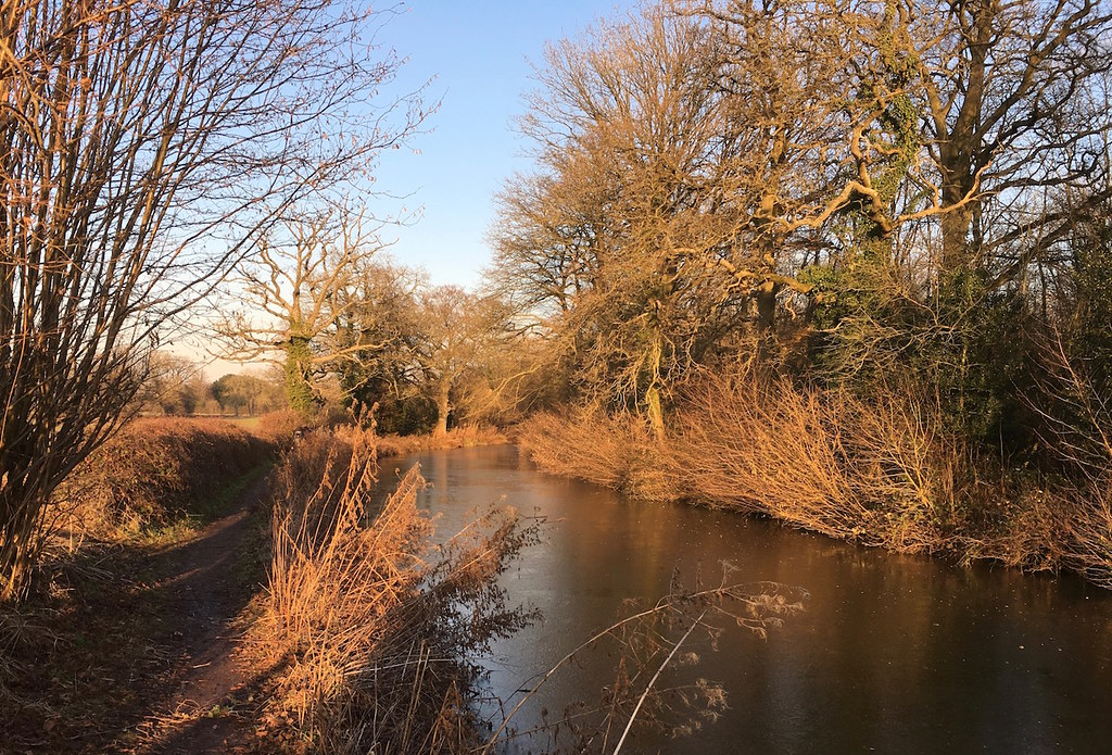 The canal, late afternoon, January Hook to Winchfield walk
