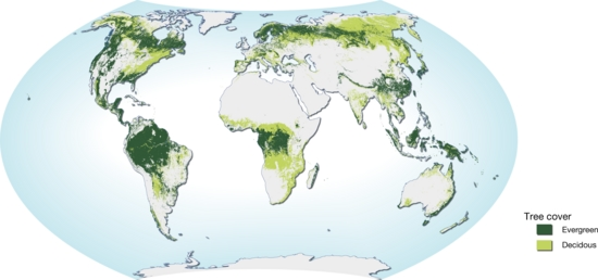 the forest world map World Map Of Forest Distribution Natural Resources Forests