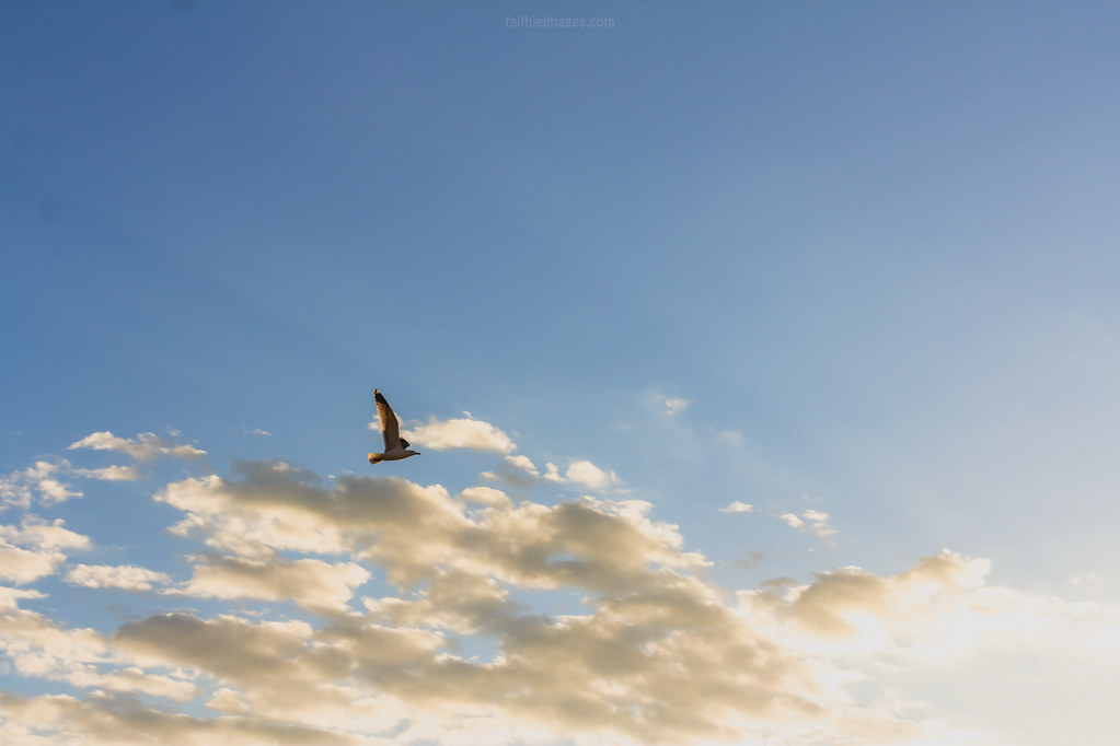 Seagull flying into the sunset light