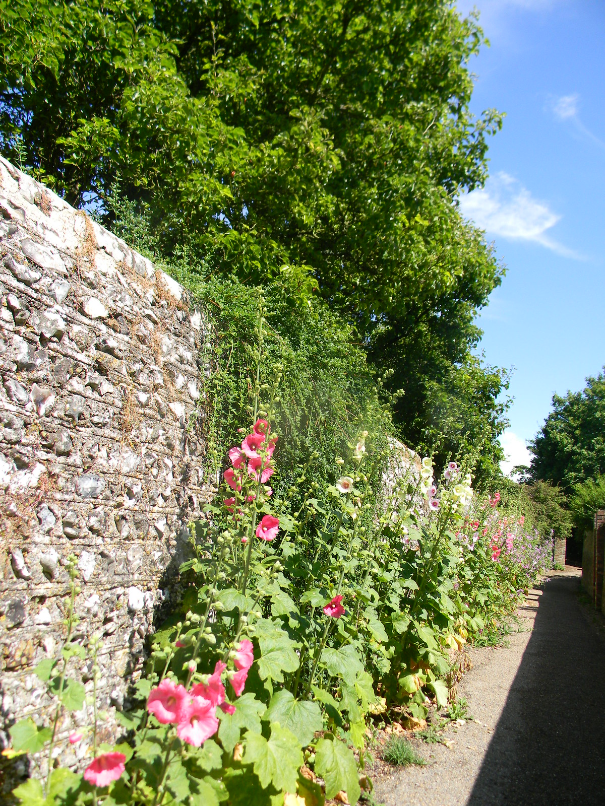 Hollyhocks West Firle Lewes to Berwick