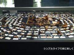 人と自然の博物館きのこ標本