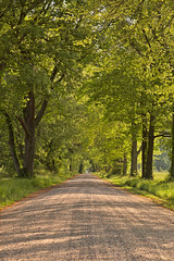 Wye Island Canopy Road