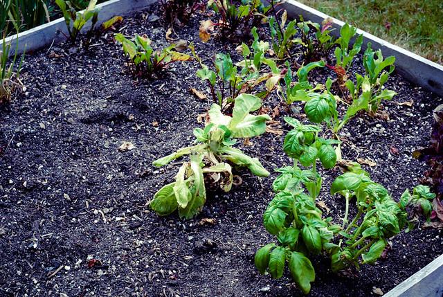 GardenRemains