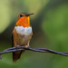 Bird On A Wire by Robin-Wilson-Off