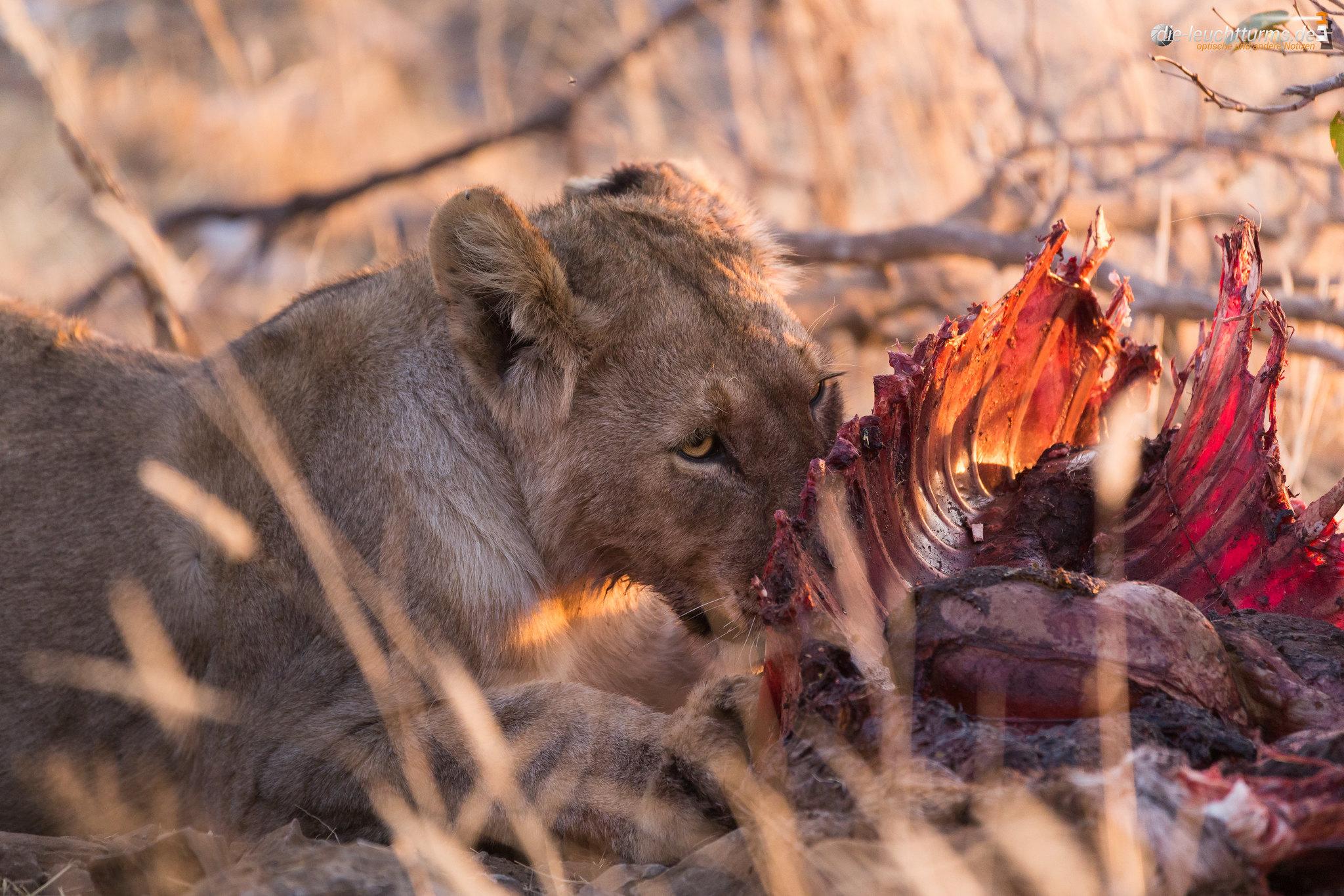 A Dinner of  Kudu