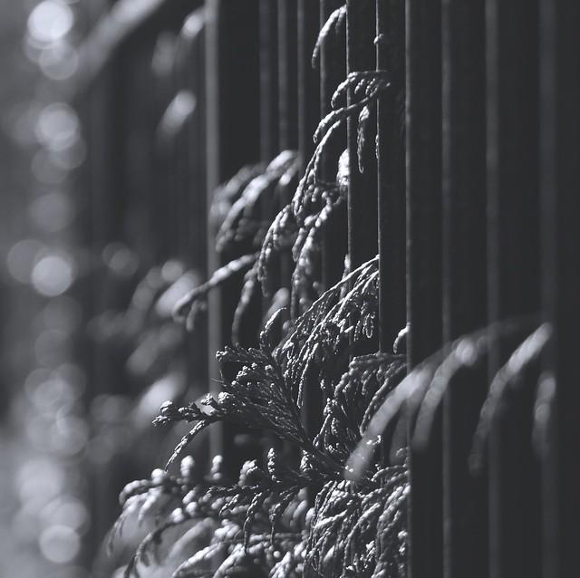 Fence and foliage, Panasonic DMC-G1, Lumix G Vario 45-200mm F4.0-5.6 Mega OIS