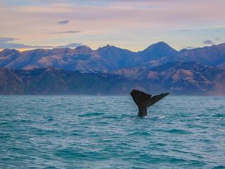 Whale's Tail, Kaikoura