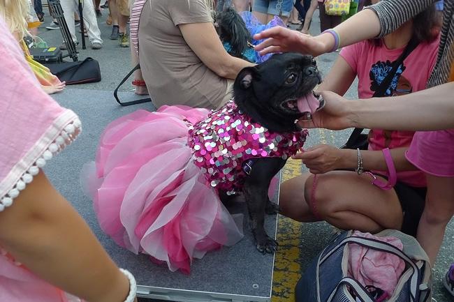 Dog show, nyc