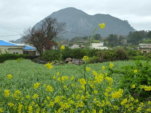 Co-Jejudo-Seogwipo-Sentier Olle 10-Sanbangsan (5)