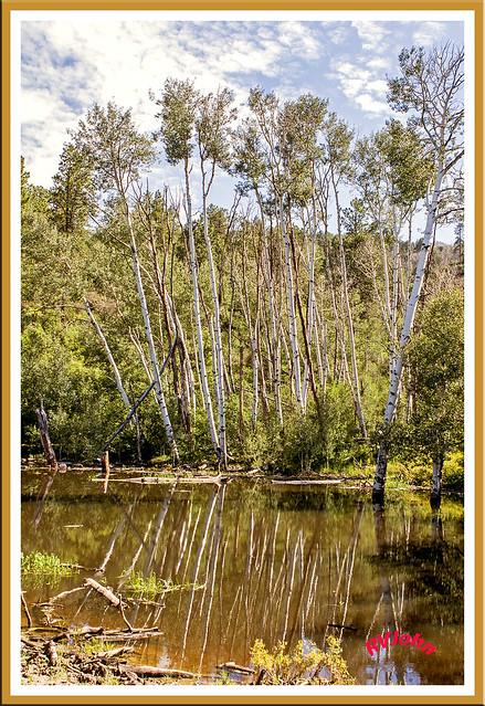 Aspen Pond 20d_2228