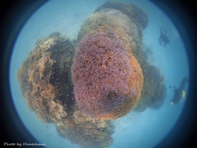 極上サンゴ