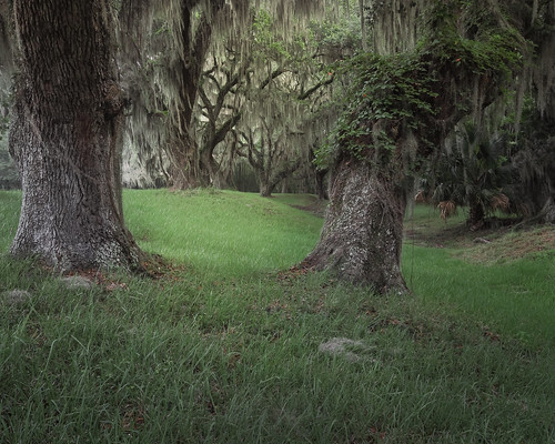 summer color tree green nature canon georgia landscape moss oak spanishmoss oaktrees stsimonsisland canon1022mm fortfredericanationalmonument canon7d