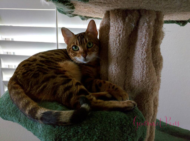 Whiskers & Paws July 2016 Edition (7)