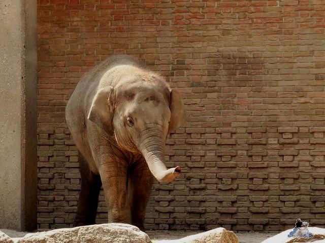 Zoo Berlin 07.08.2015  07