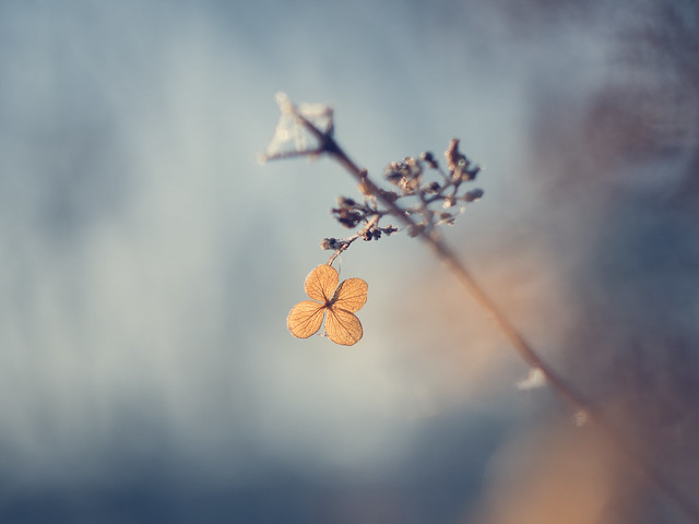 Just a little hint of frost and lots of Helios bokeh