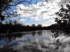 Wantagh - Twin Lakes Preserve - Autumn (62)