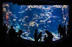 Steinhart Aquarium _MG_7651