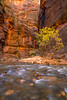 Zion National Park Autumn Colors & Winter Snow Fine Art Photography 45EPIC Dr. Elliot McGucken Fine Art Landscape and Nature Photography: Sony A7RII!