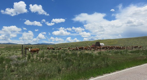 animals landscapes colorado cattle co rockymountains custercounty