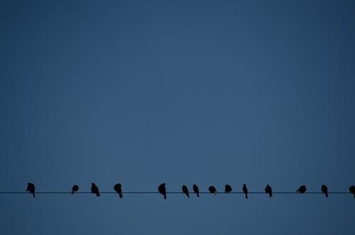 Autor: Guille Barbat