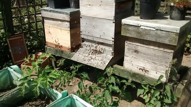 bee hives June 15 2