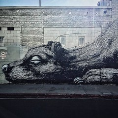 More #LAStreetArt by Belgium #graffiti artist ROA located in the #ArtsDistrict. #DTLA #art #mural #VSCOcam