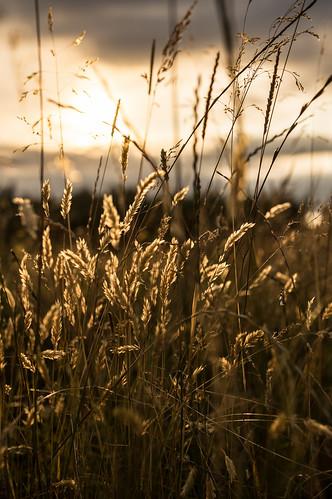 Overgrown grasses