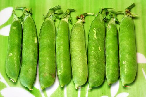 Erbsenschoten Erbsenhülsen Erbse Erbsen Hülsenfrucht Hülsenfrüchte Foto Brigitte Stolle